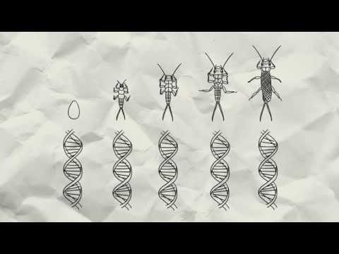 DNA-Barcoding an der Zoologischen Staatssammlung München